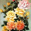 Bowl of Roses 1914